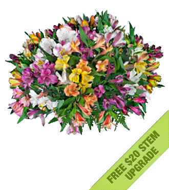 Multi-Color Peruvian Lilies FREE Upgrade