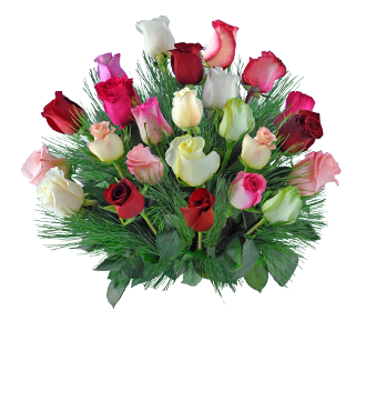 24 Multi-color Holiday Roses