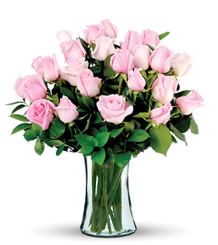 12 Pink Long-Stem Roses-24 Pink Long-Stem Roses