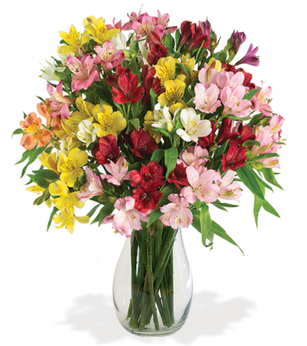 Multi-Color Peruvian Lilies