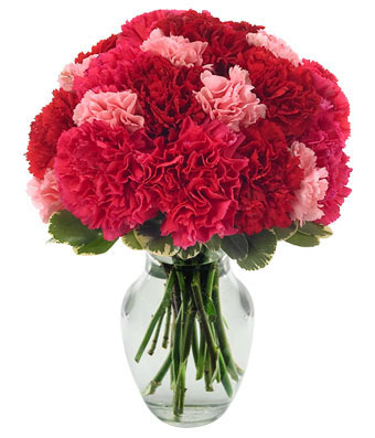 Contemporary Carnations