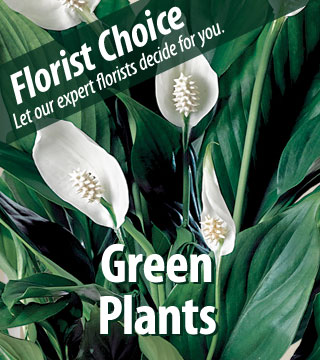 Florist Choice - Green Plants - Greater