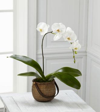 FTD® White Phalaenopsis Orchid