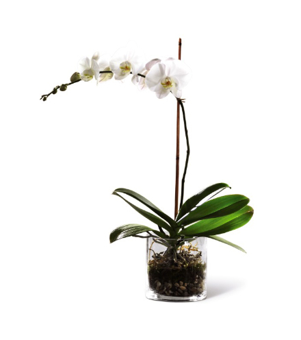 FTD® White Orchid Planter
