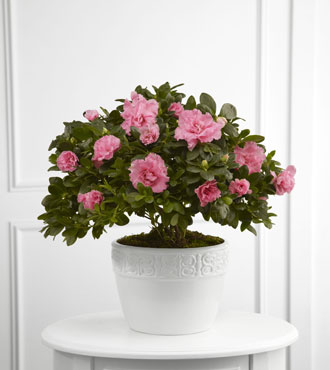 FTD® Vibrant Sympathy™ Planter