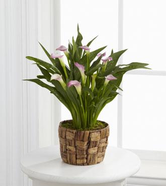 FTD® Calla Lily Planter