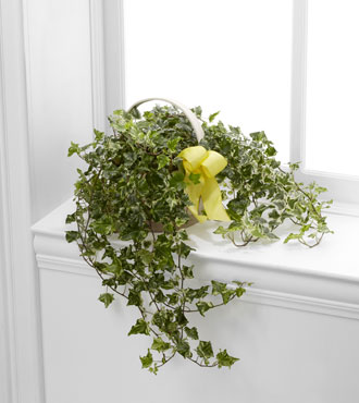 FTD® Solace™ Ivy Planter