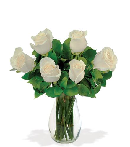 6 White Long-Stem Roses