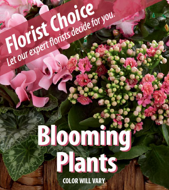 Florist Choice - Blooming Green Plants