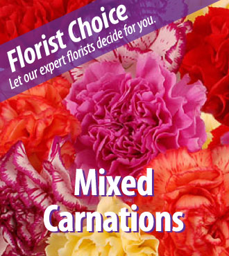 Florist Choice - Mixed Carnations-Great
