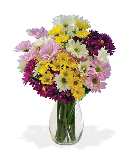 Daisy Smiles Bouquet - Great