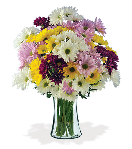 Daisy Smiles Bouquet - Greatest