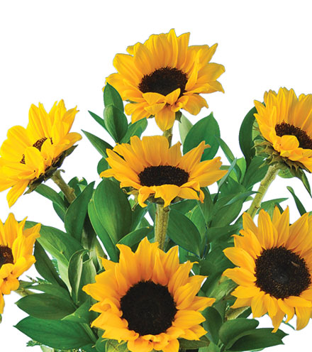 Lazy Day Sunflowers Bouquet - Great