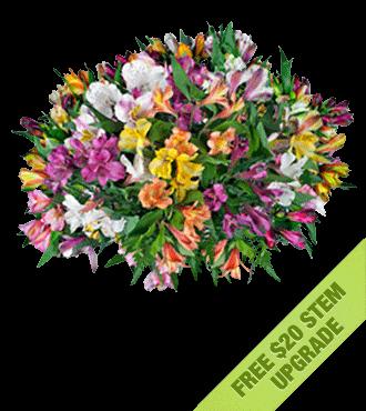 Multi-Color Peruvian Lilies FREE Upgrade