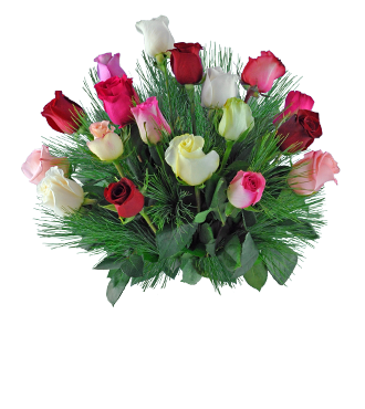 18 Multi-color Holiday Roses