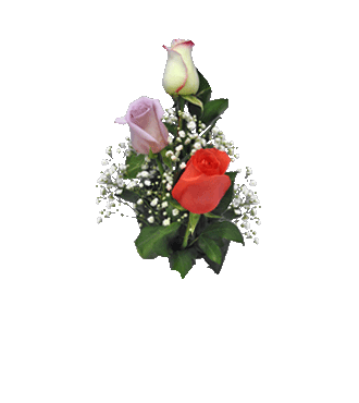 3 Multi-Color Long-Stem Roses