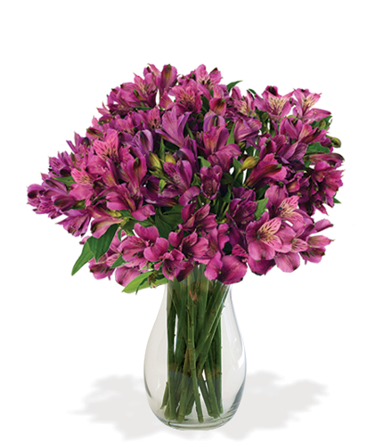 Purple Peruvian Lilies Bouquet - Great