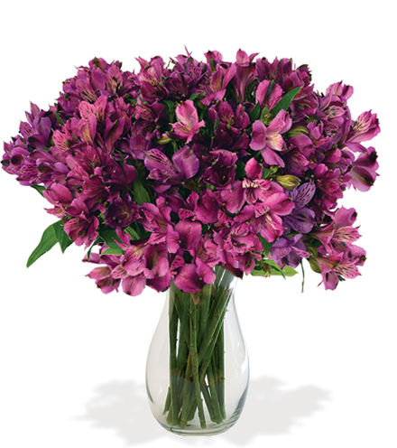 Purple Peruvian Lilies Bouquet - Greatest
