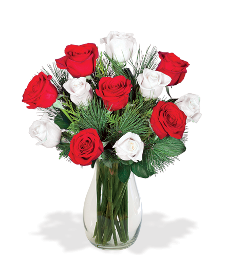 12 Red & White Holiday Roses