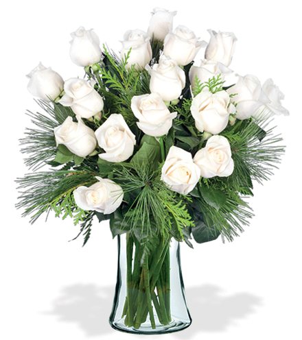 18 White Holiday Roses