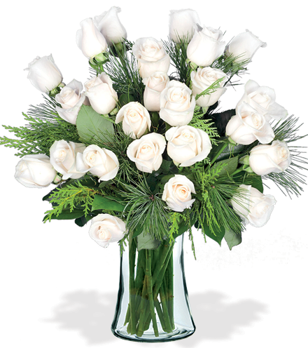 24 White Holiday Roses