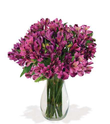 Lavender Alstroemeria