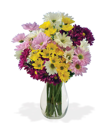 Daisy Smiles Bouquet From  $60