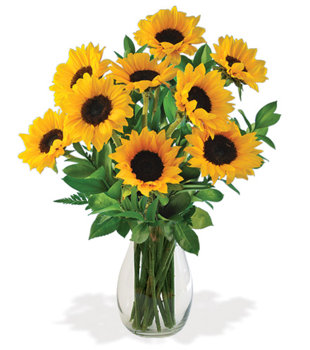 Lazy Day Sunflowers