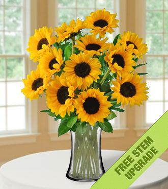 Lazy Day Sunflowers FREE Upgrade