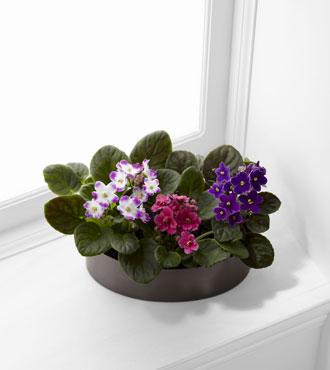 FTD® African Violets Planter