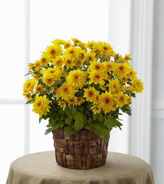 FTD® Chrysanthemum Bouquet