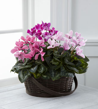 FTD® Mixed Cyclamen Planter