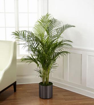 FTD® Palm