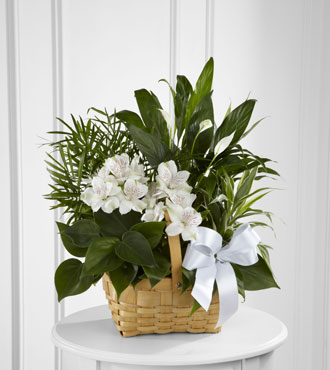 FTD® Peace & Serenity™ Dishgarden