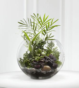 FTD® Woodland Greens™ Terrarium