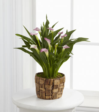 FTD® Calla Lily Planter From  $75