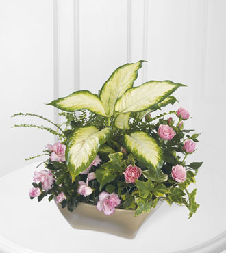 FTD® Garden of Grace™ Planter