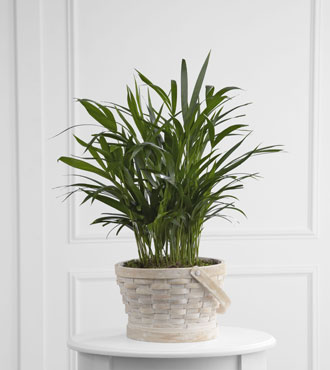 FTD® Deeply Adored™ Palm Planter