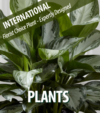 Florist Choice Plant - International