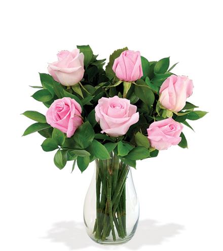 6 Pink LongStem Roses