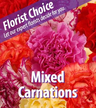 Florist Choice - Mixed Carnations - Greatest