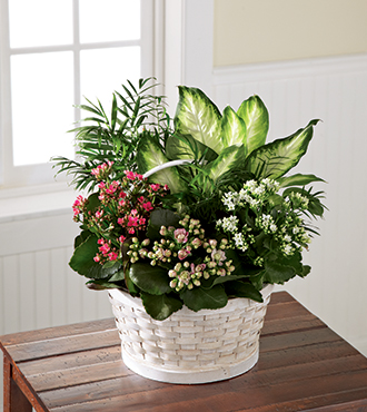 FTD® Rural Beauty™ Dishgarden