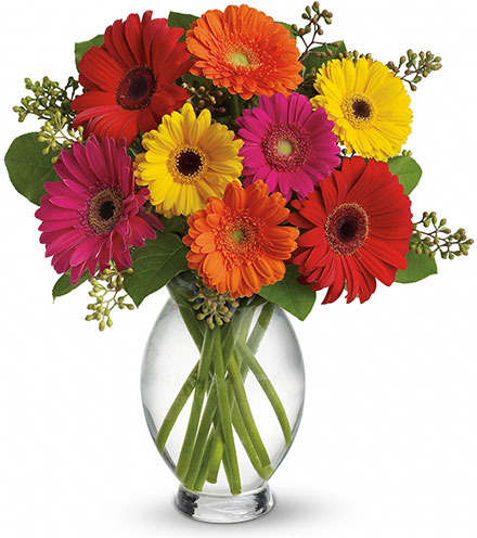 Gerbera Brights Bouquet From  $80
