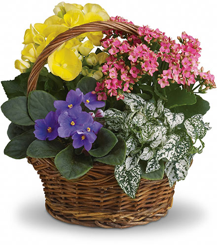 Mixed Garden Basket