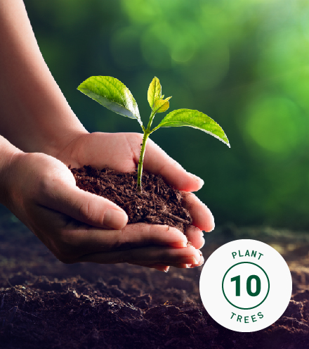 10 Trees of Tribute with Certificate