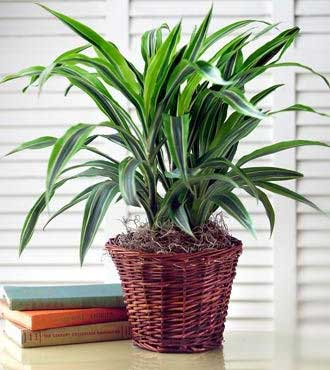 Green Plant From  $85
