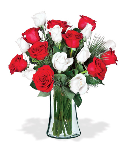18 Red & White Holiday Roses