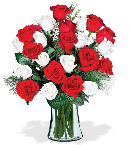 24 Red & White Holiday Roses