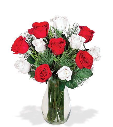 Red & White Holiday Roses Bouquet Flower Delivery